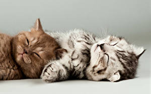 Images Cats Kitty cat Two Sleep animal