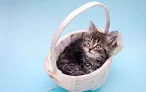 Bilder Hauskatze Katzenjunges Weidenkorb