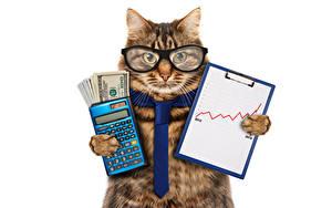 Fonds d'écran Chat domestique Monnaie Lunettes Cravate Fond blanc Drole  un animal Humour