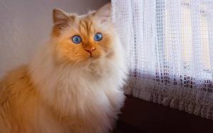 Fotos Katze Schnauze Blick Tiere