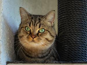 Desktop hintergrundbilder Katze Schnauze Blick Tiere