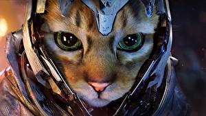 Bilder Hauskatze Schnauze Helm Blick ein Tier Fantasy