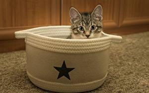 Hintergrundbilder Katze Kleine Sterne Katzenjunges Kopf Blick