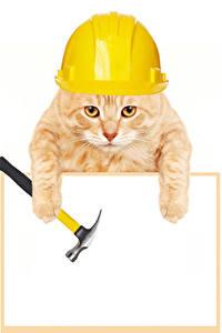 Bilder Katze Vorlage Grußkarte Weißer hintergrund Helm Pfote Lustiger Tiere