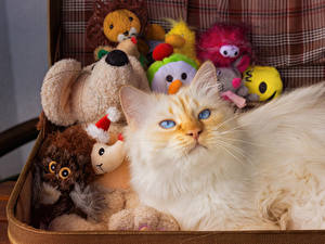 Fotos Hauskatze Spielzeug Blick ein Tier