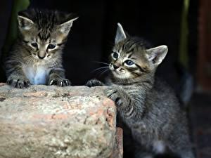 Hintergrundbilder Katzen 2 Katzenjunges