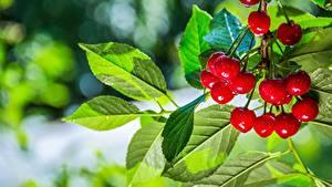 Hintergrundbilder Kirsche Sommer Blatt Ast Bokeh Lebensmittel
