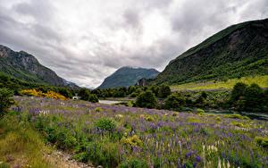 Desktop hintergrundbilder Chile Gebirge Fluss Lupinen Wolke Ein Tal Patagonia Natur