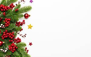 Bilder Neujahr Beere Vorlage Grußkarte Weißer hintergrund Ast