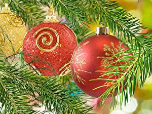 Fotos Neujahr Ast Kugeln Rot