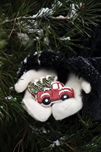 Bilder Neujahr Ast Fausthandschuhe Tannenbaum
