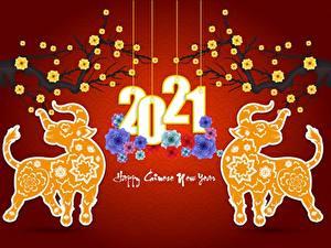 Hintergrundbilder Neujahr Stier 2021 Roter Hintergrund Wort Englisch