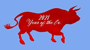 Hintergrundbilder Neujahr Rinder 2021 Text Englisch Rot Farbigen hintergrund