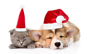 Pictures New year Cats Dog Puppy Kittens Winter hat Welsh Corgi Sleeping 2 animal