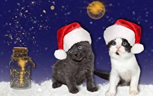 Fotos Neujahr Katzen Einweckglas Mütze Kätzchen