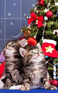 Fotos Neujahr Hauskatze 2 Kätzchen Kugeln Blick