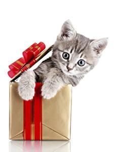 Bilder Neujahr Hauskatze Weißer hintergrund Schachtel Katzenjunges Blick