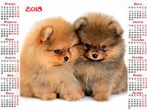 Fotos Neujahr Hunde Kalender 2018 2 Welpe Spitz Russische Tiere