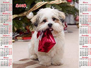 Hintergrundbilder Neujahr Hunde Kalender Bologneser Geschenke 2018 Russische Tiere