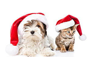 Pictures New year Dog Cats Kittens Yorkshire terrier Winter hat 2 White background animal