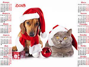 Wallpapers Christmas Dog Cat Calendar White background 2018 Winter hat Dachshund Balls Animals