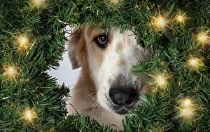 Image Christmas Dogs Fairy lights Branches Glance Animals