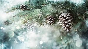 Hintergrundbilder Neujahr Zapfen Schnee Ast