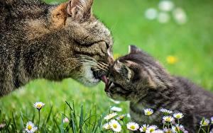 Photo Closeup Cat 2 Grass Kittens animal