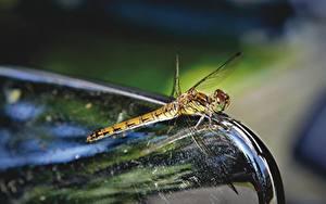 Bureaubladachtergronden Van dichtbij Libellen Insecten Onscherpe achtergrond een dier