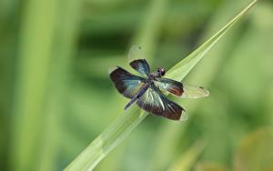 Bilder Hautnah Libellen Insekten Unscharfer Hintergrund Tiere