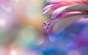 Bilder Nahaufnahme Tropfen Blütenblätter Blumen
