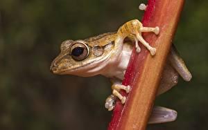 Fotos Hautnah Frosche Augen Pfote ein Tier