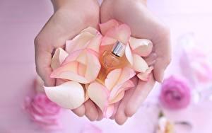Tapety na pulpit Z bliska Ręce Płatki Perfumy