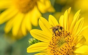 デスクトップの壁紙、、クローズアップ、昆虫、ミツバチ、ボケ写真、動物