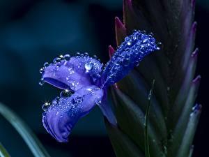 桌面壁纸,,特寫,鸢尾属,散景,蓝色,水滴,花卉