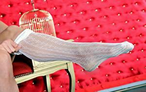 Fotos Hautnah Bein Nylonstrumpf Unscharfer Hintergrund junge Frauen