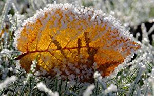 Fonds d'écran En gros plan Macro Feuillage Gelée blanche Herbe Nature