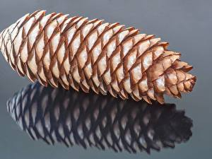 Desktop hintergrundbilder Großansicht Zapfen Grauer Hintergrund Spiegelt Pine Cone Natur