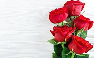 Fotos Großansicht Rose Vorlage Grußkarte Blumen