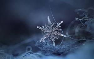 Fotos Nahaufnahme Schneeflocken Eis