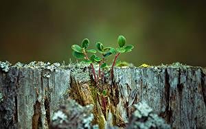 Hintergrundbilder Hautnah Baumstumpf Ast Blattwerk