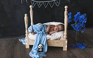 Fotos Kornblume Teddybär Bett Baby Schläft Kinder