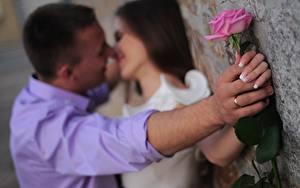 Bilder Paare in der Liebe Mann Rosen Zwei Hand Ring Küsst Mädchens