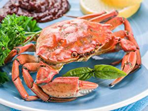 Fotos Krabben Großansicht Lebensmittel