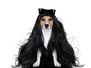 Hintergrundbilder Kreative Hund Weißer hintergrund Jack Russell Terrier Haar Brille ein Tier