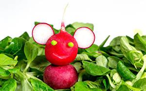Bilder Kreativ Gemüse Radieschen Weißer hintergrund Lebensmittel