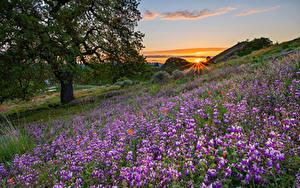 Fotos Rittersporne Morgendämmerung und Sonnenuntergang Grünland Hügel Bäume Lichtstrahl Natur