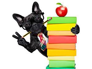Bilder Hunde Äpfel Finger Weißer hintergrund Bulldogge Schwarz Buch Brille Bleistift Handschuh ein Tier