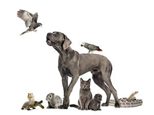 Pictures Dog Bird Parrots Rabbits Cat Turtles Guinea pigs Snake White background Puppies Gray animal