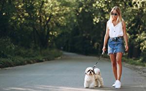 Hintergrundbilder Hunde Unscharfer Hintergrund Blond Mädchen Bologneser Brille Wanderung junge frau
